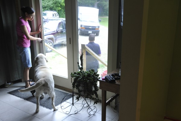 On Tuesday, Jennifer Fall kept the family's yellow Labrador retriever, Duke, from going outside after a delivery man came to the door. The Fall family has been especially vigilant of their pets after they found Hank, the family's chocolate Labrador retriever, near death at their back door in Palmyra on Monday evening, the victim of an apparent shooting. The Somerset County District Attorney's office is investigating the shooting of the dog.