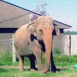 Elephant plays tunes on harmonica at National Zoo
