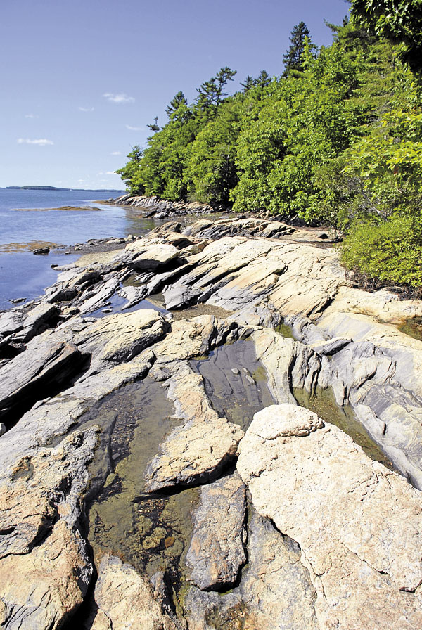 Trees abut the granite shore at Wolfe's Neck State Park in Freeport