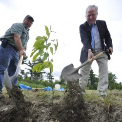 Groups promote American chestnut growth