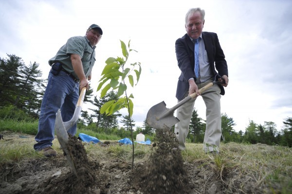 Glen Rea (right) of Bangor, chairman of The American Chestnut Association, and Bangor city forester Brian Dugas, shovel topsoil around one of two newly planted 1-year-old Chestnut saplings in a clearing off the Loop Road in the Rolland F. Perry City Forest on Friday afternoon, June 3, 2011. The plantings are part of an national effort to re-introduce the American Chestnut in the U.S after a 100-year-old chestnut blight nearly wiped away the native American tree. The trees are a gift from The Maine Chapter of the The American Chestnut Foundation to the city of Bangor and are the culmination of 26 years of backcross breeding and approximately $30 million in research costs. According to fellow TACF board member Ann Rea, 250 old growth chestnut trees have been found in Maine — from the New Hampshire border and as far north as Milo. In seven years these young trees should start to seed, the group said.
