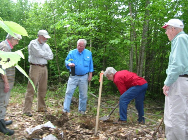 Glen Rea, the Maine and national chairman of The American Chestnut Foundation, points out the large tap root on a seeding that was planted Thursday by the Narramissic Friends Meeting and the Great Pond Mountain Conservation Trust on trust lands in Orland. The planting, in conjunction with the foundation, is part of an effort to restore the American chestnut which was ravaged by blight more than a century ago. Listening are (from left) Ginny Davis, forester Roger Greene (partly obscured) Fern Stearns and Dave Davis.
