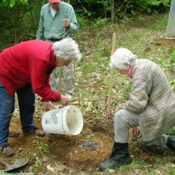 Rockport launches new Roadside Tree Planting Program