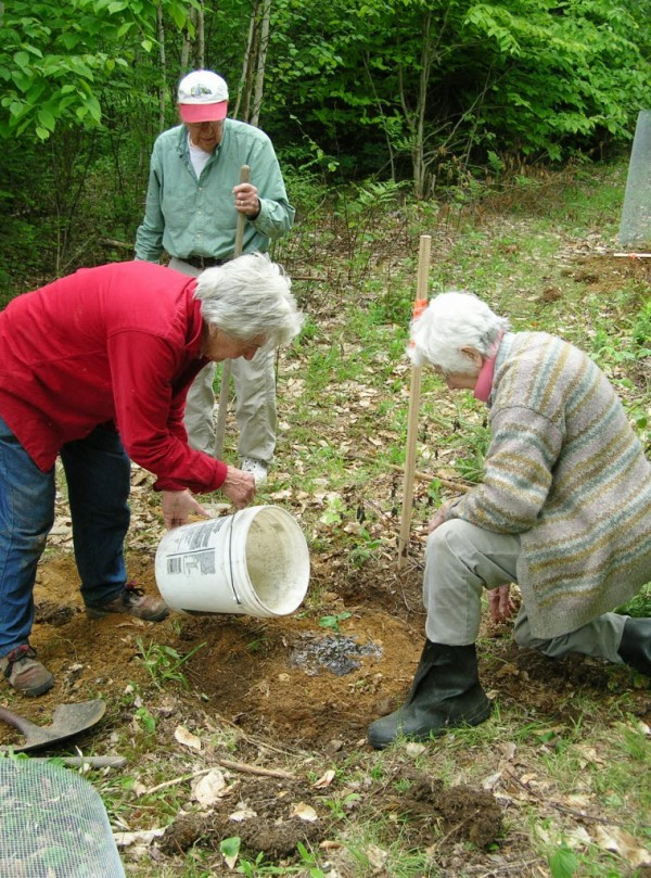 Fern Stearns, a member of the Narramissic Friends meeting, waters a newly planted American chestnut seedling, while Dave Davis and Ginny Davis, also Friends members, look on. The planting was done on land owned by the Great Pond Mountain Conservation Trust in Orland in conjunction with The American Chestnut Foundation which provided the seedlings. It is part of a national effort to restore the American chestnut which was ravaged by blight more than a century ago.