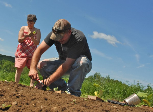 With the help of his mother Judy Theriault, Bradley Theriault transplants seedlings at his Theriault's All Natural Farm in Fort Kent. &quotI think it is so great he is doing this,&quot Judy Theriault said. &quotI took a week off from work to help him, so he'd better not go galavanting off.&quot
