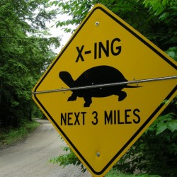 Maine installing turtle crossing road signs