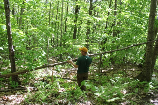 John Anders, the president of the midcoast chapter of New England Mountain Bike Association, moves a felled tree as he prepared to make a new trail Saturday at the municipally-owned side of Ragged Mountain. The work was part of National Trails Day on Saturday.