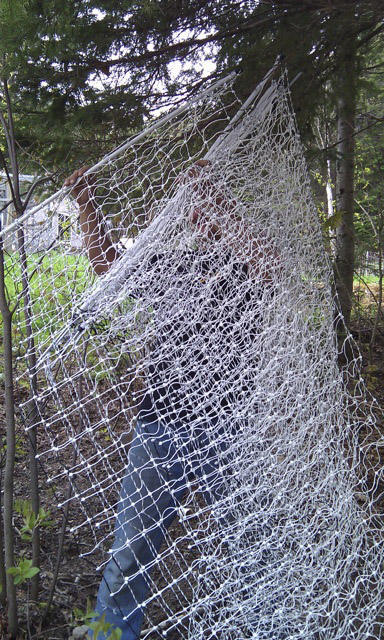 It is most definitely a tangled web we weave when attempting to install poultry netting. Patience, an extra set of hands and the ability to cuss in two or more languages are highly recommended.