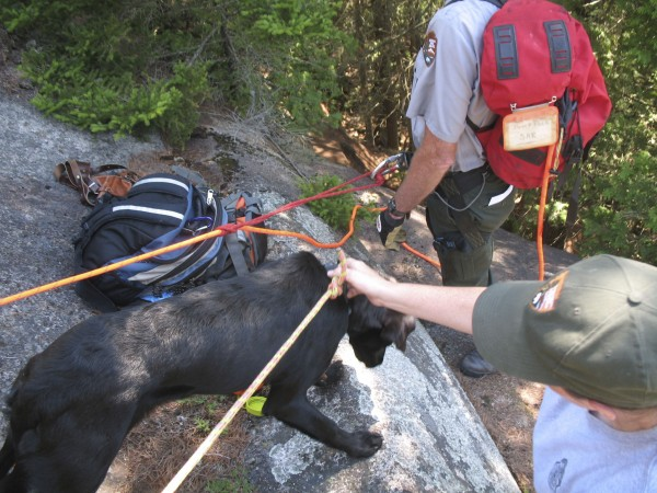 Bailey, an 8-month-old puppy who was stranded for up to four days on a ledge in Acadia National Park, was rescued Friday, July 29, 2011, by several park rangers. She enjoyed some water after being put back on a leash.