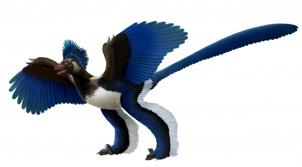 "This artist's rendition released by Nature shows what scientists at Chinese Academy of Sciences in Beijing are dubbing ""Xiaotingia zhengi."" The discovery of its fossilized remains helped scientists propose an evolutionary tree that suggests archaeopteryx is not a bird."