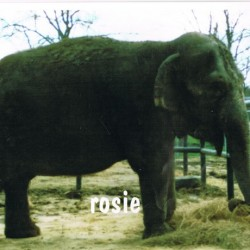 Vet wants to rehabilitate old circus elephant in Hope
