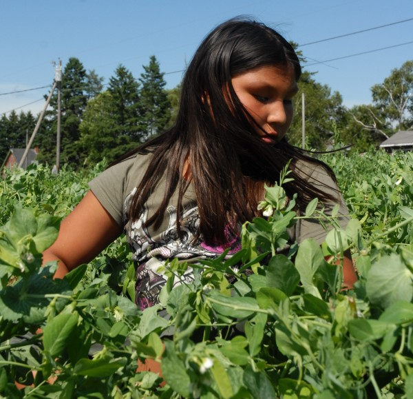 "Mishun Morey, 9, of the Aroostook Band of Micmacs spent part of Saturday afternoon in the band's pea patch at the Micmac Farmers Market. ""It's a good idea to have this garden,"" Morey said. ""There are a lot of healthy foods here."""