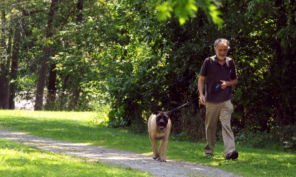 Jim Bishop of Bangor walks his dog Kully, a 6-year-old bull mastiff, along the Kenduskeag Stream Park in Bangor in July 2010. Bishop said he hopes the city does establish a dog park. Nearly a year after city councilors granted their approval, a grass-roots effort to create a dog park on a city-owned parcel on the waterfront is taking on renewed energy.