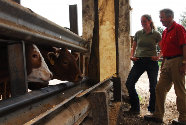 Christi White, feedlot manager, and Bill Haggett, CEO of Pineland Farms Natural Meats, look over the cattle being kept in Fort Fairfield.