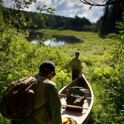In search of wild trout: The Baxter experience