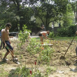 Intro to Permaculture/Permablitz