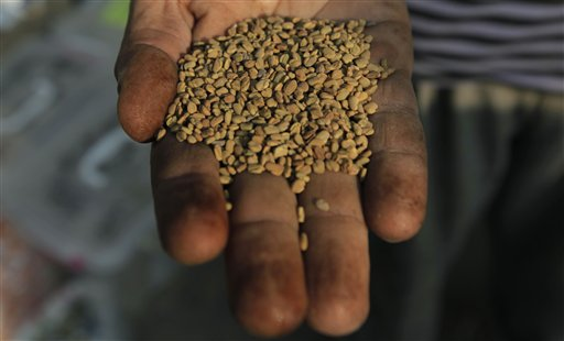 In this Thursday, June 30, 2011 picture, a spice dealer holds up fenugreek seeds at his shop in Cairo, Egypt. In early May 2011, John Meyer stayed at a lakeside hotel in Hamburg, Germany and became one of the few U.S. victims in one of the worst food poisoning outbreaks in recent world history from a rare and deadly strain of E. coli bacteria that caused thousands of illnesses in Europe. The outbreak ultimately was traced to a batch of fenugreek seeds from Egypt. Fenugreek seeds, which taste a bit like burnt sugar, are sometimes used as a spice in cooking. Fenugreek sprouts are used in salads.