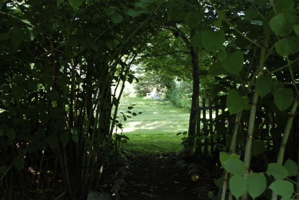 A shady path through the Japanese knotweed connects neighbors Joan Bennett and Andrea Whyte and their gardens. The gardens will be featured by the Belfast Garden Club's Open Garden Tour 10 a.m.-4 p.m. Friday, July 29.