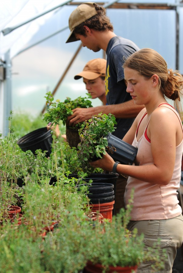 Benna Chase (from left), Spencer Nietmann and Natalie Jones repot herbs at Turner Farm on North Haven on Thursday, July 21, 2011. The produce from Turner Farms and other farms on the islands supports the needs of Nebo Lodge, a fine dinning restaurant on North Haven.
