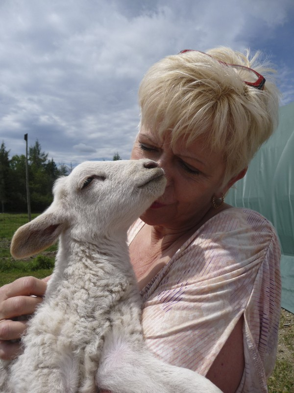 Nita Rippere nuzzles a lamb at Coyote Creek Farm in Milbridge on Sunday, July 24, 2011, during the Maine Department of Agriculture's Open Farm Day. Rippere and her husband, George, established the diversified beef, pig and horse farm on land that was the original site of the village of Milbridge. The 250-acre farm is expanding, constructing an open horse arena and establishing riding trails. It contains a seven-story hunting camp, two ponds, barns, pastures and paddocks.
