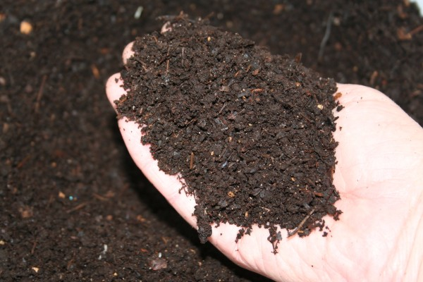 One of the rewards of home vermiculture is the nutrient-rich worm compost that can be used in the garden to build healthy soil.