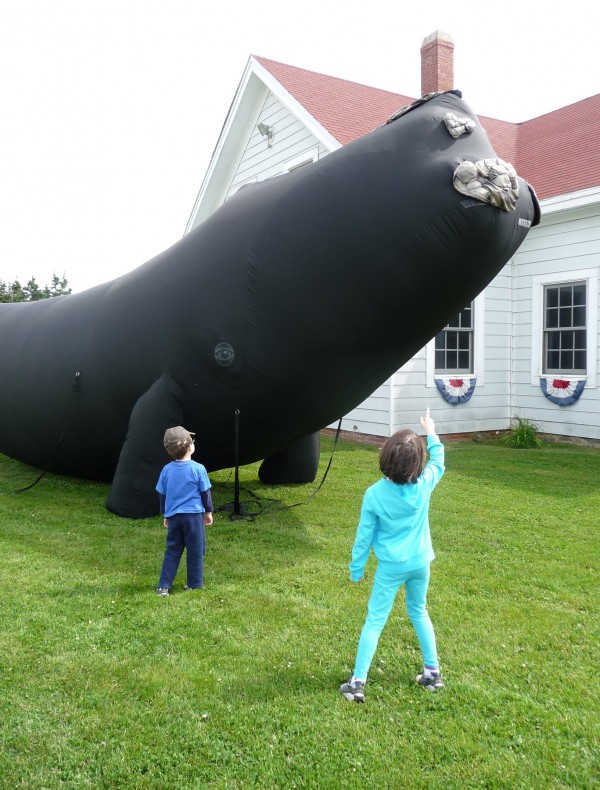 "Alex Turner, 4, (left) and his sister, Leila Turner, 6, both from Waterville are amazed at the immensity of a life-sized balloon representing a right whale at West Quoddy Head Lighthouse in Lubec on Friday. Representatives from the New England Aquarium, which conducts whale research each summer from Lubec, were on hand to educate the public about their work. ""The research we do on whales can be translated towards protecting many other species,"" Jessica Taylor of NEA said."