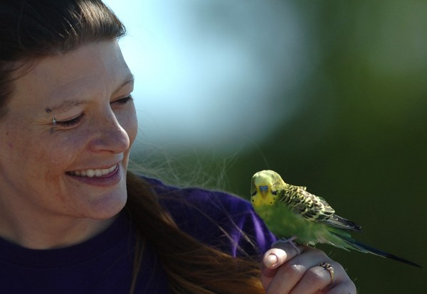 Bridgette Hamilton of Bangor admires a stray parakeet perched on her finger Tuesday. Hamilton was walking along Front Street with her mother when the stray bird flittered out to her from inside a tent workers were setting up for the upcoming American Folk Festival.