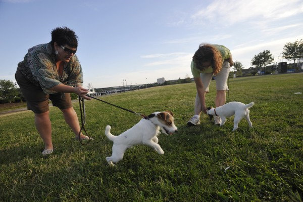 Sherry O'Roak (left) of Hampden keeps her 6-month-old Parson Russell terrier, Eli, on a short leash as he tries to grab a seagull feather in the grass on Bangor's Waterfront. O'Roak joined her mother-in-law Elizabeth O'Roak (right) of Orrington and Eli's sister, Beatrice, for an informal gathering of the Penobscot Valley Kennel Club early Monday evening, August 1, 2011. Club members gather there on Monday evenings in the summer to train their dogs and share advice. The O'Roaks said they are are preparing the terriers for their confirmation class at the Union Fair later this month.