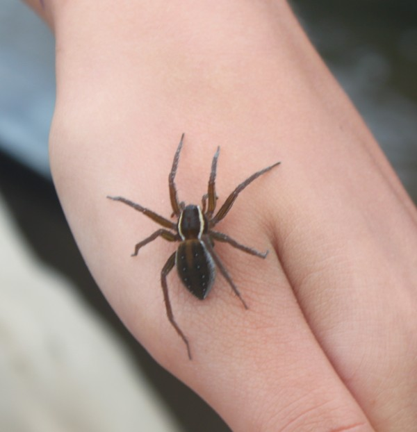 Zoe Fassett-Manuszewski, 16, of upstate New York holds a water spider while on a canoeing trip on Northeast Creek on Wednesday, Aug. 10.