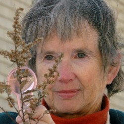 Bangor-Area naturalist receives environmental award
