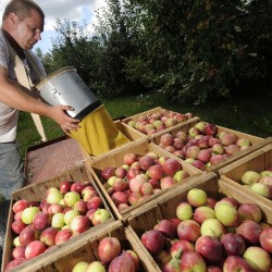 With thriving orchard empire, the apple doesn't fall far from this Skowhegan family tree