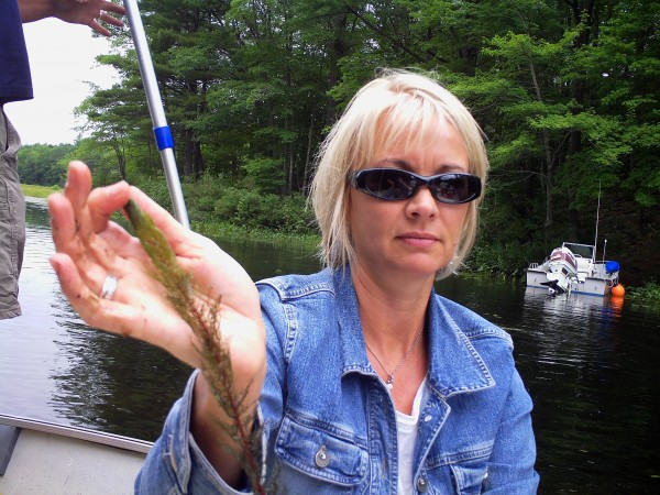 Water Quality Manager Mary Jane Dillingham shows a piece of milfoil pulled from the water in the Basin, the pond that feeds directly into Lake Auburn. Water quality officials are doing what they can to keep the invasive plant species from spreading.