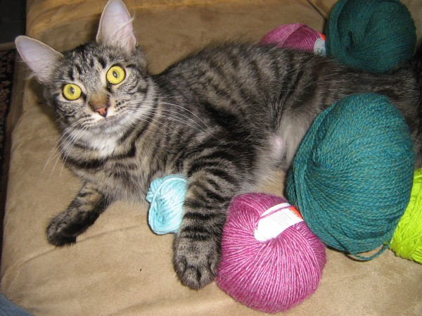 Sissy Too stirs up trouble in a yarn stash.