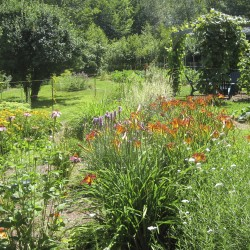 Immerse yourself in 5 senses at Ocean Glimpse Farm during Belfast Garden Club Open Garden Days