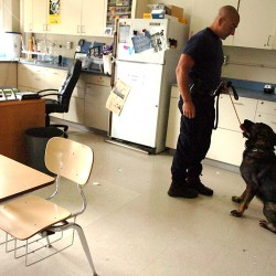 Dedicated dogs, handlers crucial to backwoods searches