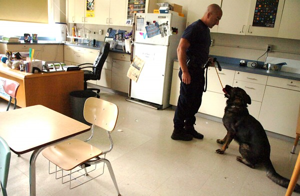 Officer Robert Angelo of the Bangor Police Department rewards Lex with positive reinforcement and a chew toy after Lex successfully completed a training exercise on Thursday, Aug. 11, 2011, at the James F. Doughty Middle School in Bangor.