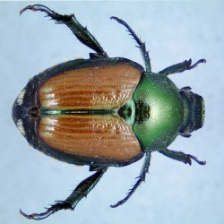 Destructive emerald beetle discovered in Boston -officials