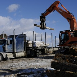 Report: Maine woods can support heavier logging