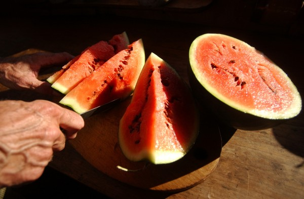 William Coperthwaite slices organic watermelon for himself and his guests in 2003.