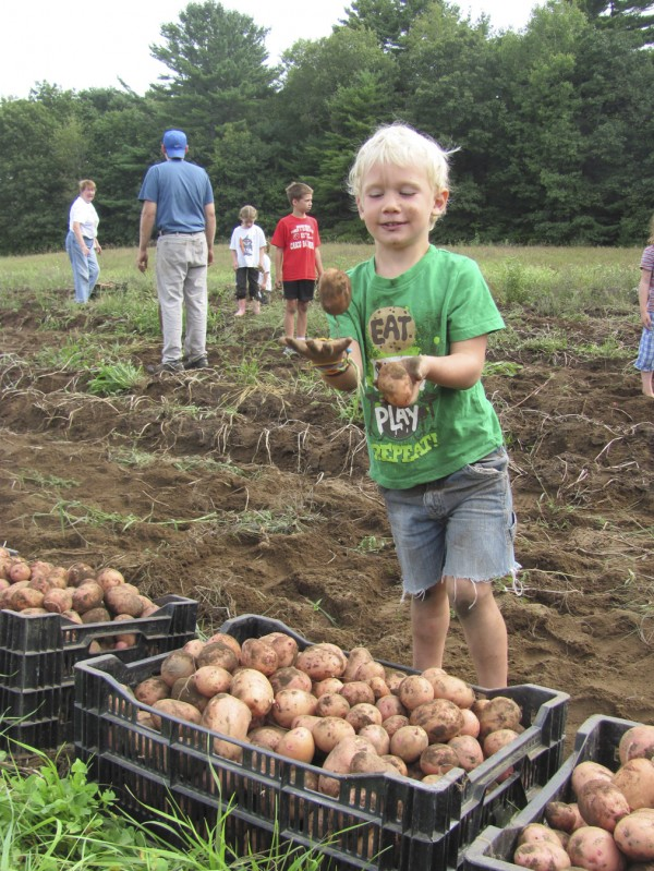 Gaffney McDonough, 4, of Bath, shows off his juggling skills Monday, Sept. 5, 2011, during a potato harvest at Crystal Spring Farm in Brunswick. The harvest, which has become a Labor Day tradition, is performed by the operators of the farm and some of the 277 families who buy shares in the crop as part of a community-supported agriculture collective.