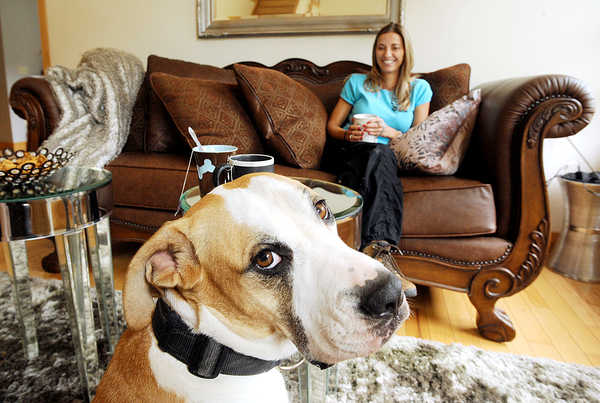 Mason is one of Lisa Nazarenko's four trained dogs that she uses to track lost cats and dogs. Mason is a boxer-hound mix.