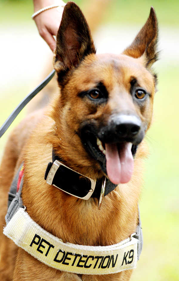 Dante is a scent-specific K-9 that Lisa Nazarenko has trained to help locate lost pets.