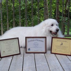 "Downeast Dog Scouts Receive Silver President's Volunteer Service Award and the Dog Scouts of America ""Top Dog"" Award"