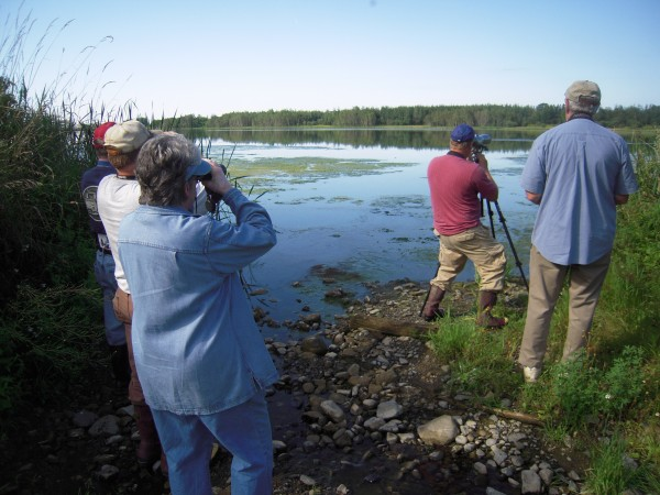 Bill Sheehan (second from right) focuses his scope on a yellowlegs shorebird on the opposite side of Lake Josephine in Easton while members of the Aroostook Birders find the bird with their binoculars.