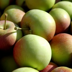 Apples: The sweet gift of autumn