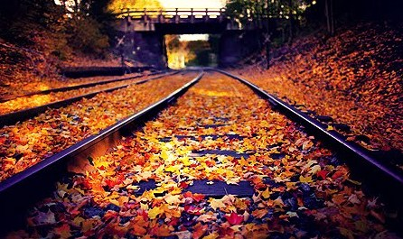 Fall leaves on railroad tracks in Brunswick