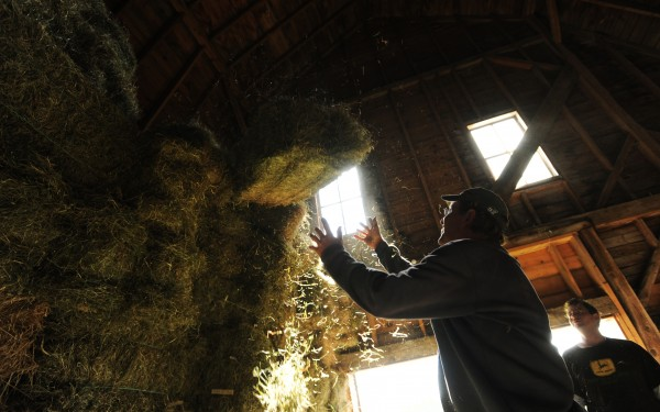 "Jeff Kelman (left) reaches to catch a falling bale of hay after he and son-in-law Jay Sullivan (right) stacked hay in the loft of Kelman's barn on Friday, Sept. 16, 2011. ""Hay in the loft is like money in the bank,"" says Kelman."