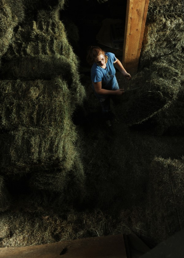 Emma Sullivan stacks hay in the families barn on Monday, Sept. 12, 2011. The Kelman's two horses will rely on the hay that is harvested this fall to get them through the cold winter months.