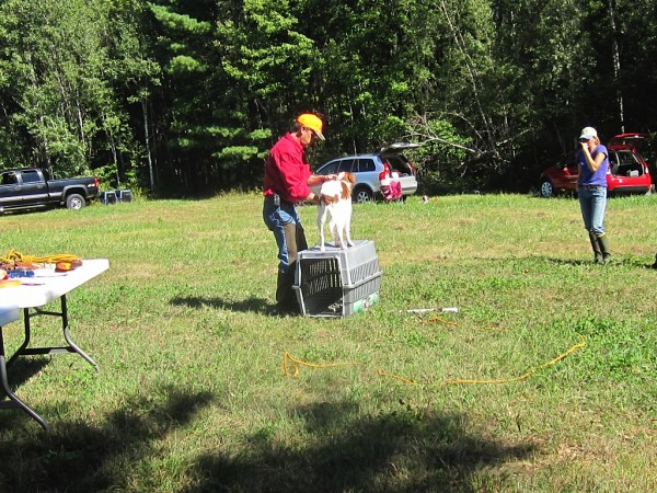Trainer Dale Southards of Raymond demonstrates how to use what you have for equipment to fine tune some of the dog's actions. Here he is showing how to use a dog crate to teach the animal not to creep up on a bird after the dog's initial pointing of the bird.