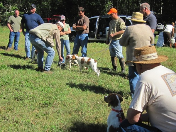 CMBC's Gary Anderson of Stillwater introduces some young dogs to live pigeons, which often are used in training. Pigeons are great for training because they will fly away if the dog gives chase after the point. Quail and other species often will run along the ground and be at risk of being caught by the dog.